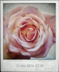 petali e aperture foto lucia baldini